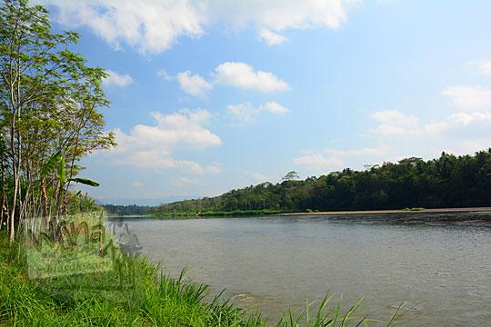 suasana damai alami sejuk pinggir Kali Progo dinaungi pohon besar tumbuh di wilayah kecamatan Sentolo Kulon Progo