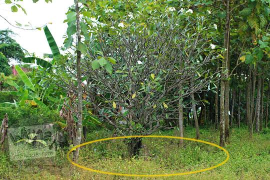 lokasi makam sipil agresi militer belanda maguwo