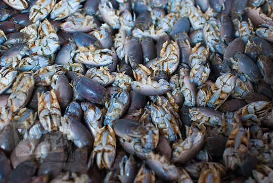 yutuk atau undur-undur laut mentah sebelum diolah di kios pantai glagah kulon progo yogyakarta