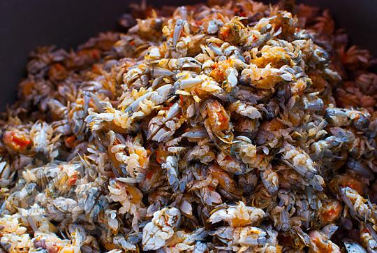 yutuk atau undur-undur laut setelah cangkangnya dikuliti di kios pantai glagah kulon progo yogyakarta