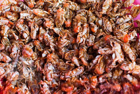 resep cara memasak yutuk atau undur-undur laut goreng di kios pantai glagah kulon progo yogyakarta