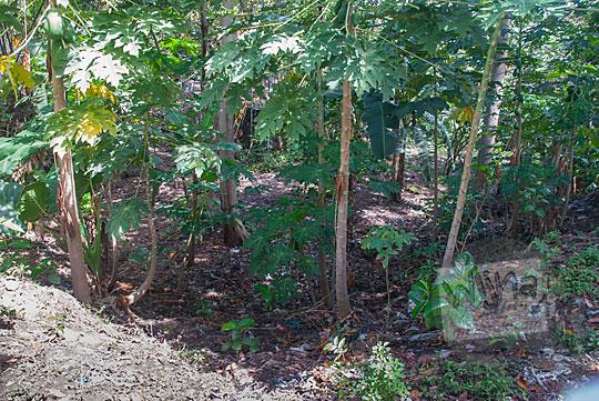 tanah kosong pembuangan bakar sampah bekas lokasi siti hinggil keraton kerto