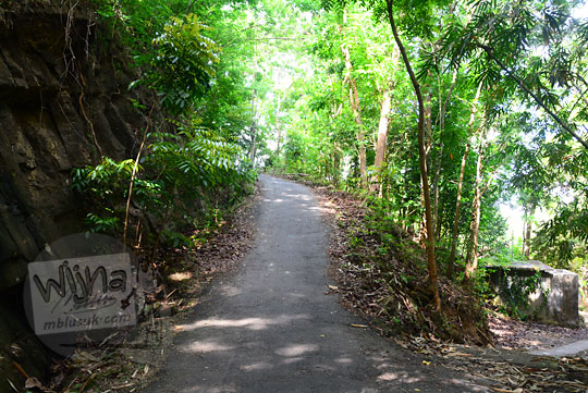 suasana tanjakan jalan desa yang dikelilingi hutan bambu di desa ngliseng dlingo bantul yogyakarta