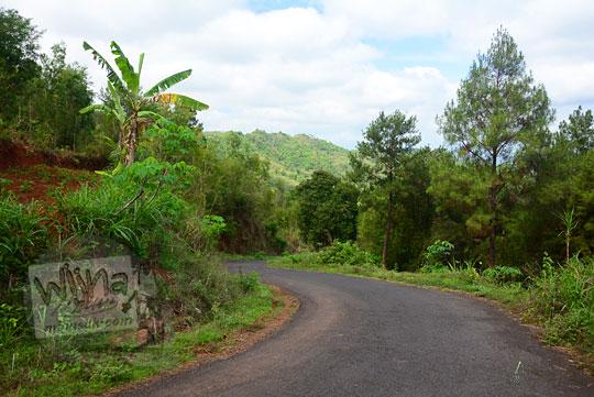 suasana ruas jalan tanjakan yang dikelilingi oleh lebatnya hutan pinus indah di wilayah dusun ngliseng dlingo bantul yogyakarta