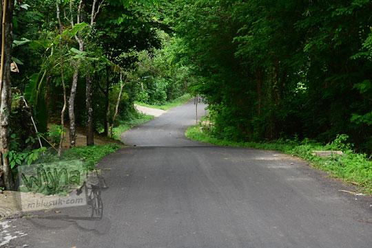 pemandangan jalan desa berwujud turunan terjal yang dikelilingi hutan dari dusun Lemah Abang Gayamharjo ke desa nawung Prambanan Sleman Yogyakarta