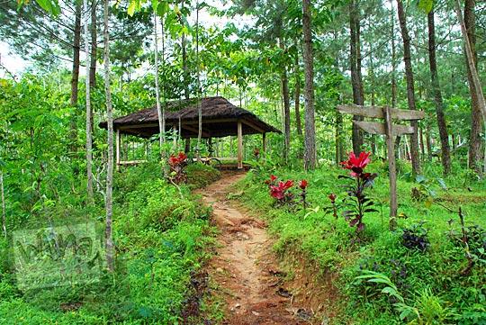 suasana hutan pinus asri masih sepi bernama srumbung sari di girimulyo