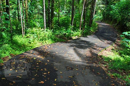 jalan turunan di dekat makam di dalam hutan wilayah girimulyo, kulon progo