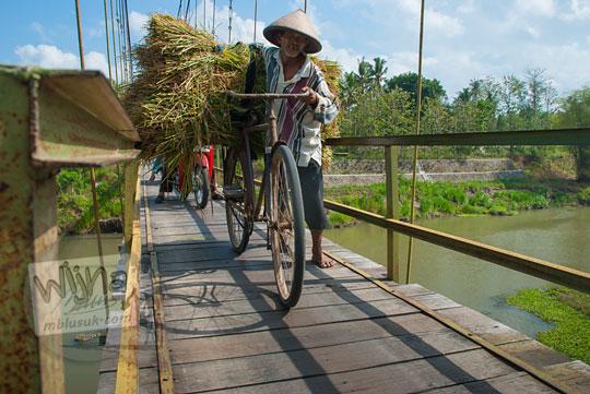 foto bapak petani tua menuntun sepeda onthel tua membawa jerami menyeberangi jembatan gantung soka di pundong bantul pada zaman dulu november 2013