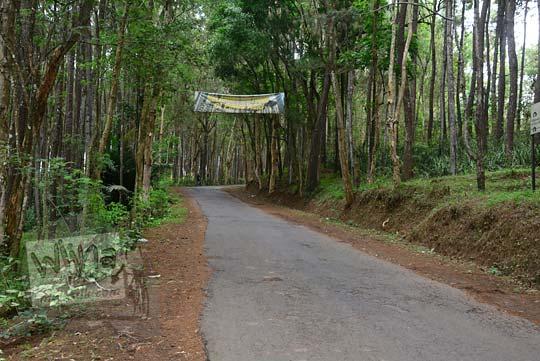 jalan tanjakan di hutan pinus mangunan bantul yogyakarta