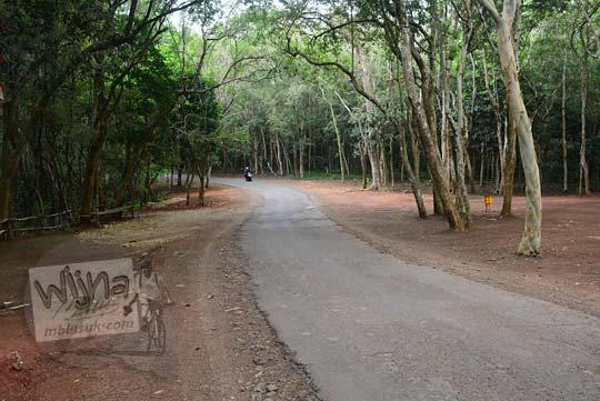 jalan rusak untuk lewat bus pariwisata di hutan pinus asri mangunan yogyakarta
