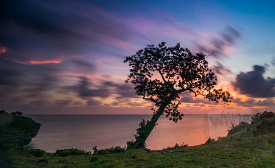 foto pemandangan indah sunset senja berlatar pohon ketapang di tebing pantai kesirat gunungkidul yogyakarta pada zaman dulu agustus 2018