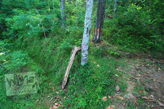 petunjuk tanda panah di pohon dalam hutan menuju curug klanceng putih purworejo