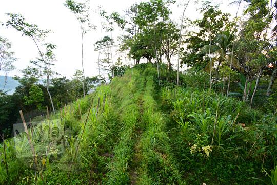 foto jalan pematang sawah menuju ke obyek wisata pos mati di desa giritengah borobudur magelang pada maret 2018