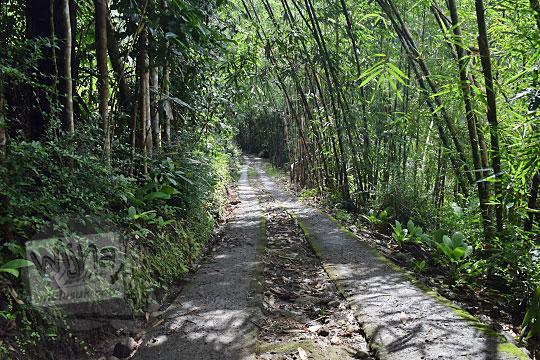 bentuk kondisi jalan cor semen menuju ke curug tamansari di desa kemejing loano purworejo