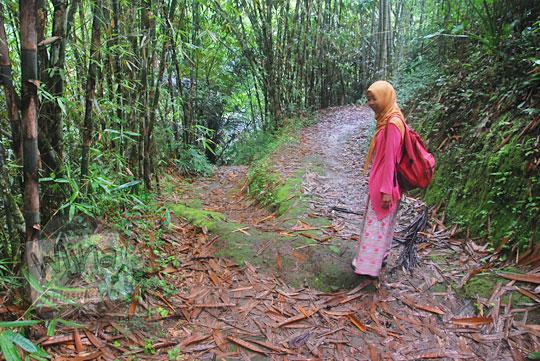 suasana pemandangan kondisi jalan setapak menembus hutan bambu menuju ke curug titang di nampirejo temanggung jawa tengah