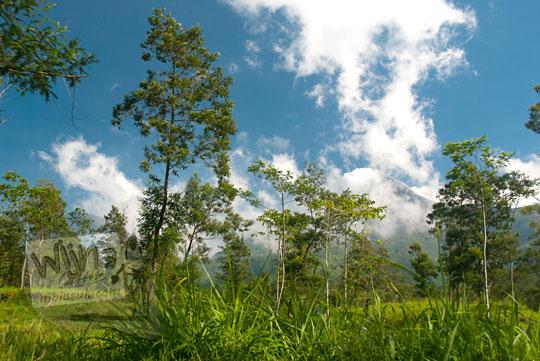hutan pohon akasia di kali talang balerante kemalang klaten jawa tengah pada zaman dulu april 2018