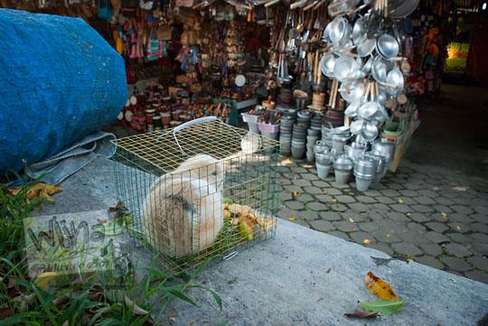 foto kelinci di dalam kandang pasar songgoriti kota batu pada April 2017