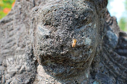 lebah arca candi tegowangi