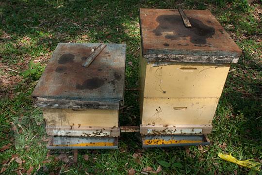 jenis kotak ternak lebah tegowangi