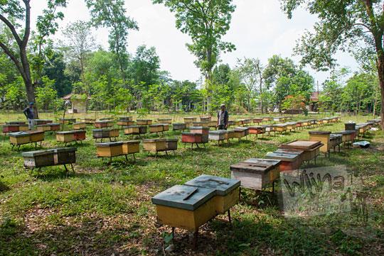 peternakan lebah candi tegowangi