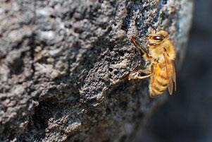 Lebah-Lebah di Halaman Candi Tegowangi