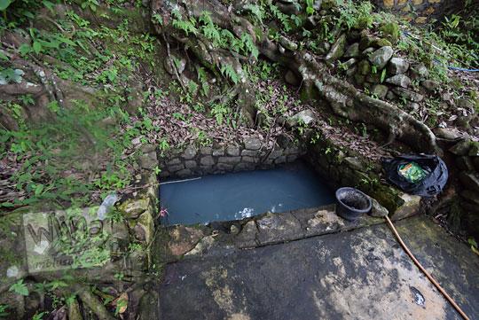 mata air pohon beringin sekaro