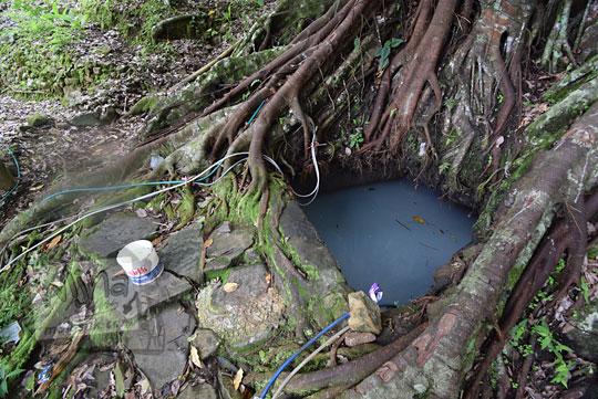 mata air pohon beringin bibis