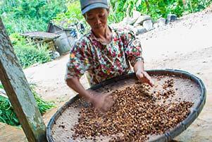Thumbnail artikel blog berjudul Membeli Biji Kopi Menoreh dari Petani Suroloyo
