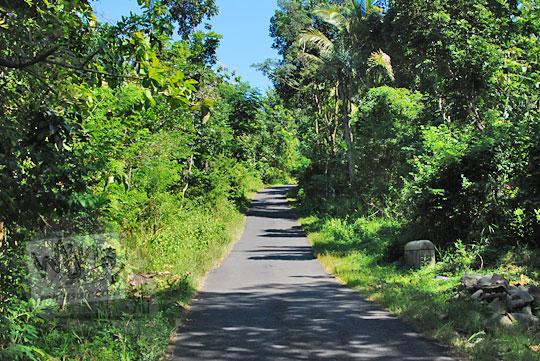 foto jalan hutan lereng menoreh arah suroloyo