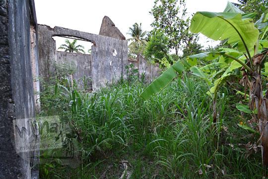 halaman belakang rumah tua belanda di dusun sewugalur kulon progo