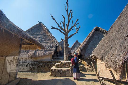 pohon tua kering di desa adat sade lombok