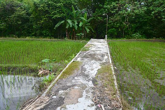 jalan sawah menuju petilasan keraton gaib bathok bolu di di dusun sambiroto purwomartani kalasan tahun 2018