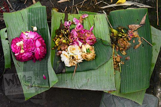 sesaji bunga mawar petilasan keraton gaib bathok bolu di dusun sambiroto purwomartani kalasan tahun 2018