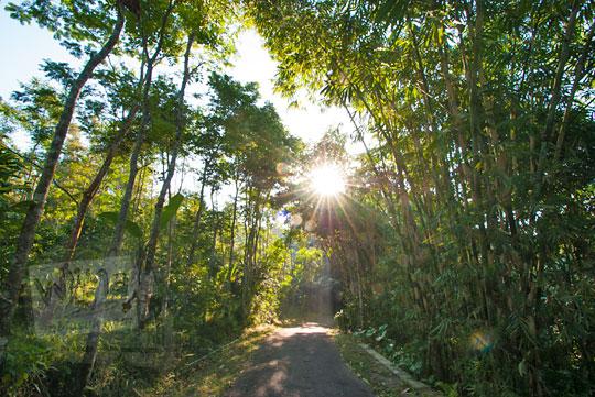 jalan hutan bambu turgo sleman
