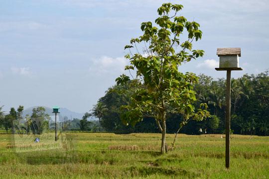 rumah burung hantu di sawah seyegan sleman yogyakarta