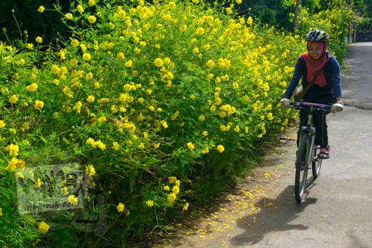 cewek jilbab bersepeda di samping kebun tanaman bunga kuning di dusun kleben sidorejo godean