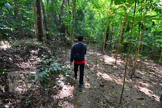 cowok jalan kaki menembus hutan di dusun nglepen sumberharjo prambanan