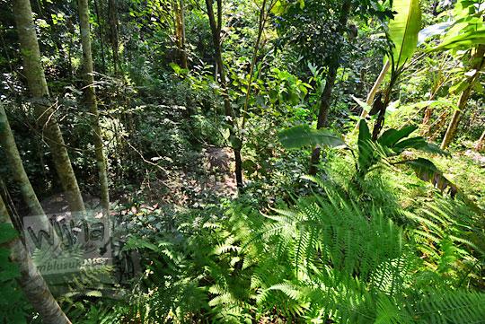 kondisi lokasi tanah ambles di dusun nglepen sumberharjo prambanan