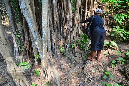 cerita pohon beringin besar keramat yang tumbuh di dekat mata air belik segaran tirtomartani kalasan sleman