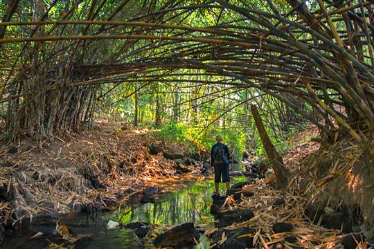 hutan bambu cantik di dusun segaran tirtomartani kalasan sleman