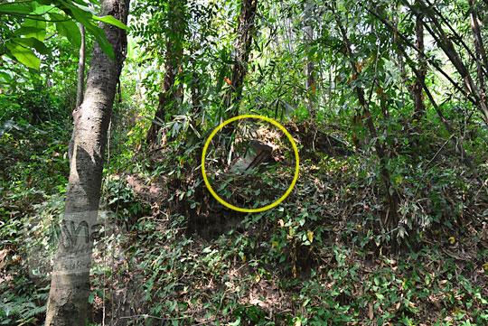 penampakan batu candi yang teronggok tertutup daun di tepi tebing sungai di dusun segaran tirtomartani kalasan sleman