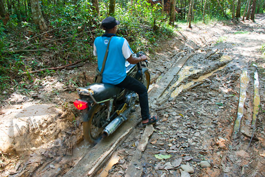 foto sepeda motor rx king berusaha melewati jalan tanah berlumpur di dalam hutan gambut kampar riau pada zaman dulu April 2016