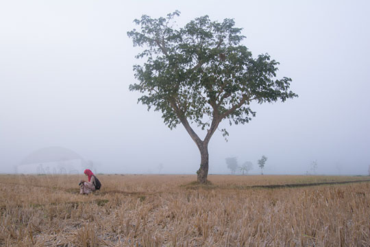 wanita duduk di dekat pohon besar di persawahan imogiri yang tertutup kabut tebal