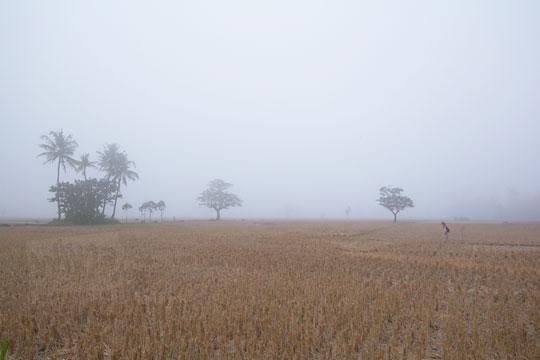 hamparan sawah kering tertutupi kabut tebal di imogiri