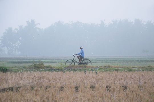 petani bersepeda melintasi pematang sawah berkabut tebal di imogiri