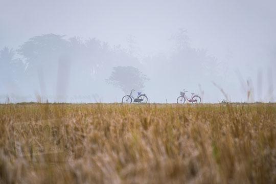 siluet dua sepeda antik di persawahan berkabut tebal di imogiri
