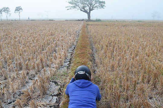 fotografer tengkurap di pematang sawah yang berkabut di imogiri