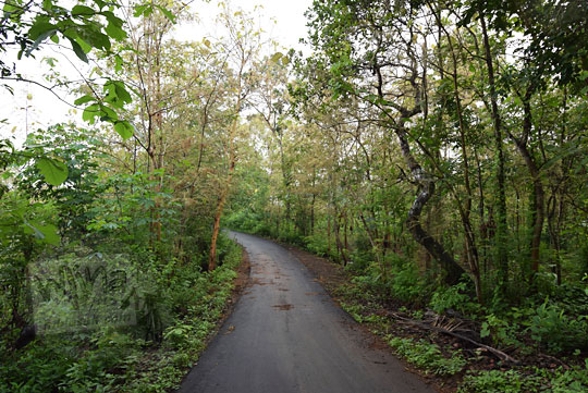 jalan hutan seloharjo pundong