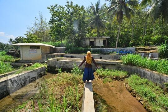 wanita berjalan di pematang tambak desa ngembel karangtengah wonosari gunungkidul
