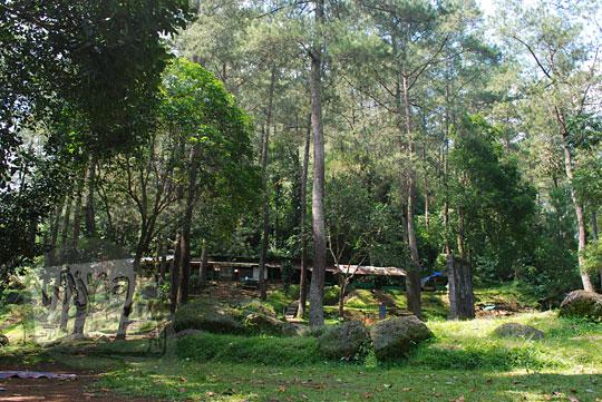 suasana hutan di sekitar curug omas maribaya